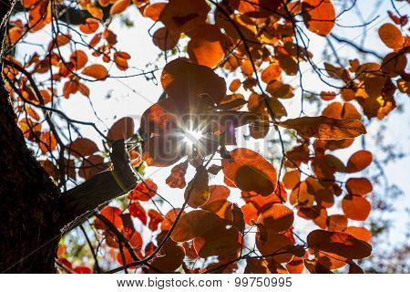 Sunbeam penetrates the bush of red autumn leaves