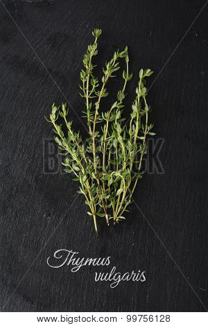 Fresh Green Thyme On Dark Slate And The Latin Name: Thymus Vulgaris