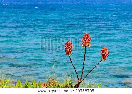 The Coast Of Paros Island