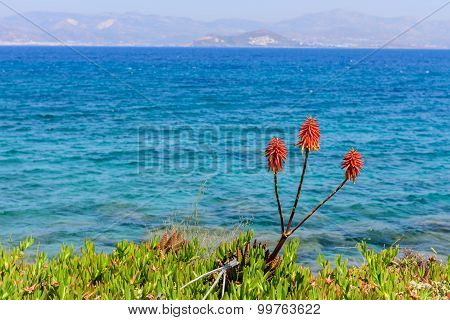 Beautiful Flower Against The Sea
