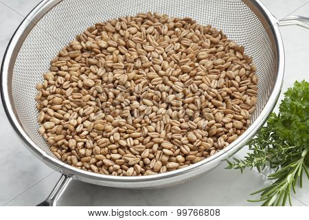 Raw Farro grains in a kitchen sieve