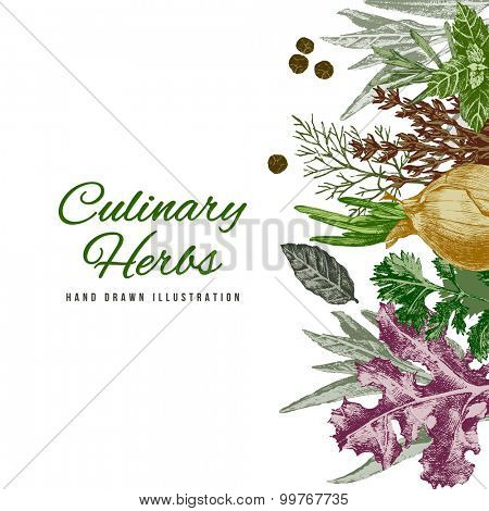 Background with hand drawn culinary herbs and spices