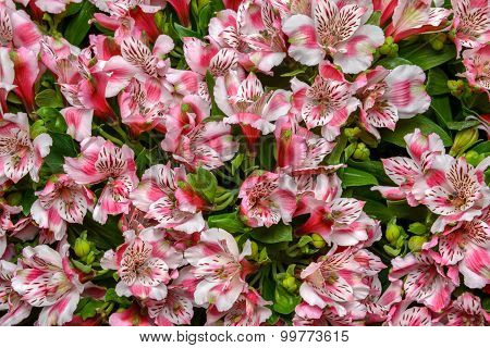 Lily Bunch Flower