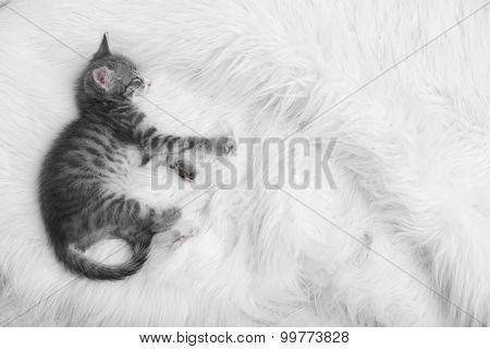 Cute gray kitten sleeping on carpet at home