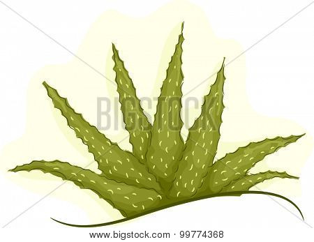 Illustration of a Cluster of Healthy Aloe Vera Plant