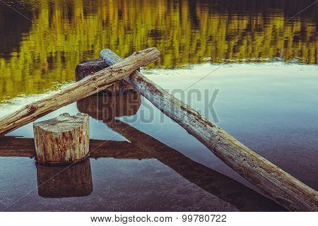 Stillness, Bare Tree Trunks Fallen In The Water