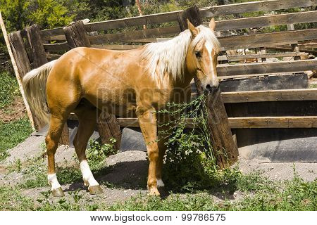 Brown Horse With A White Mane