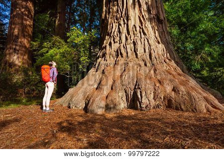 Woman standing near big tree in Redwood California