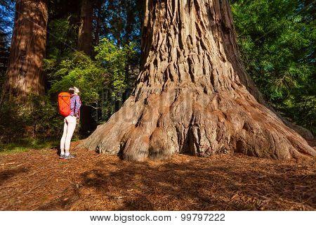 Woman standing near big tree in Redwood California
