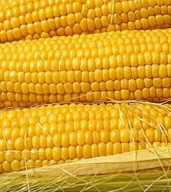picture of corn cob close-up  - close - JPG