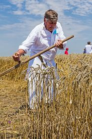 stock photo of scythe  - Farmer is reaping wheat manually with a scythe in the traditional rural way - JPG