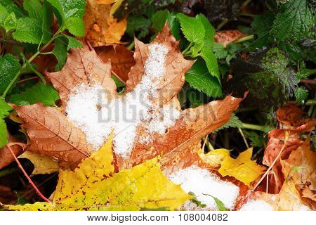 First Snow On Leaves