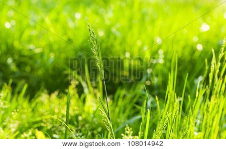 Summertime Lawn