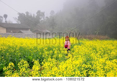 Hmong ethnic minority kids in a rapeseed flower garden in Hagiang, Vietnam