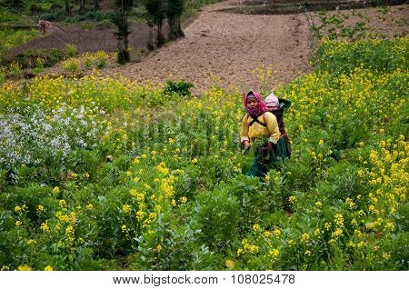 Hmong ethnic minority woman and her child on back in a field of rapeseed flower in Hagiang, Vietnam.