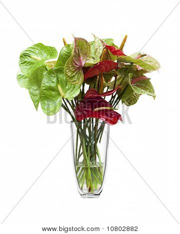 Anthurium/ Flamingo Flowers