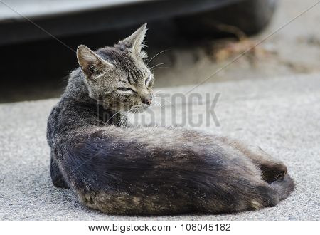 Portrait Of A Threatening Cat Lying On The Street