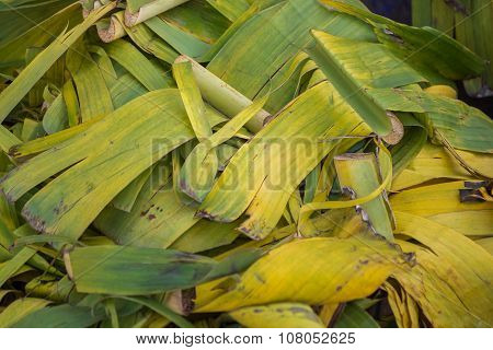 Used banana leaf in garbage,Concept for article.