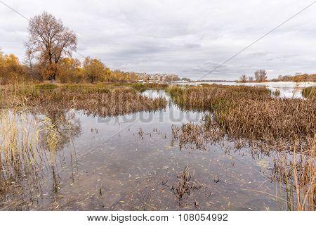 Tobacco Winter On The Dnieper River