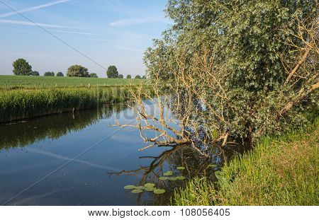 Reflected Bare Branches In Mirror Smooth Water Surface