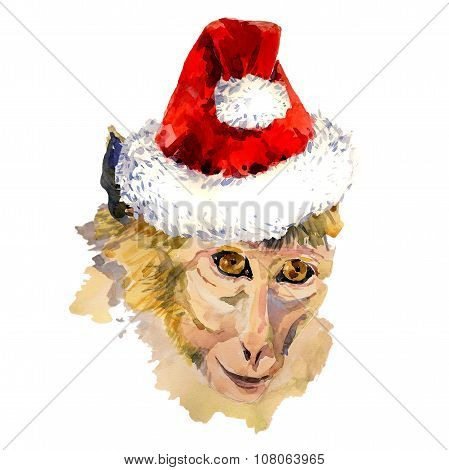 Monkey king portrait in a cool Christmas hat