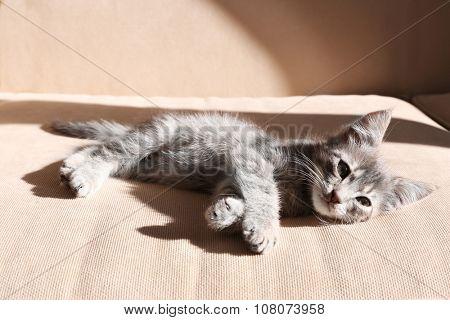 Cute little grey kitten lying on sofa
