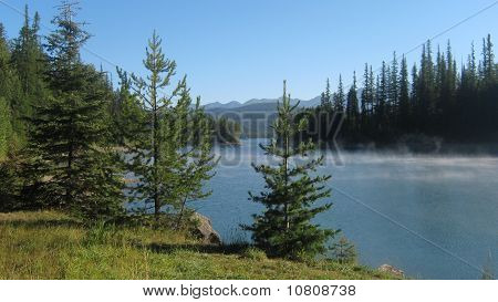 Pine Trees Overlooking a Lake.