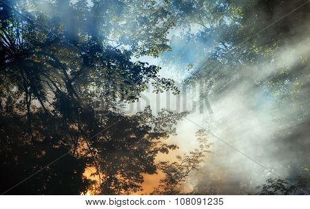 Smoke From A Forest Fire Rises Through The Trees. Sunlight Filters Through The Haze.