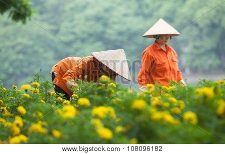 Asian gardener taking care of an yellow botany garden