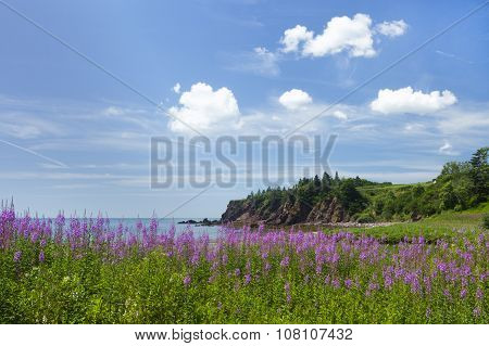 Coastal Beauty Of New Brunswick Province In Canada