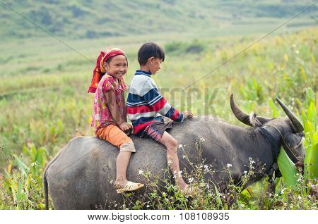 Two unidentified local children ride buffalo in Hagiang, Vietnam.