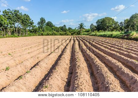 Cultivation Soil High Raised.