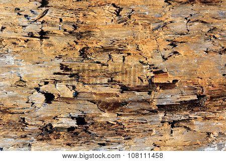 Old Wood Damaged By Borer