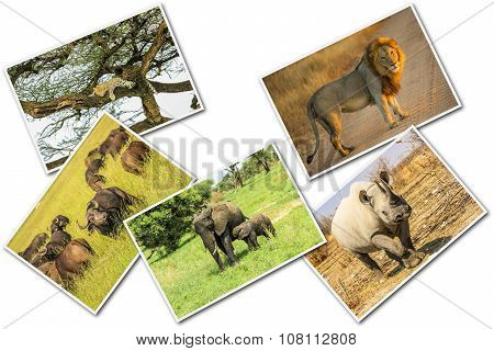 African Animals Collage