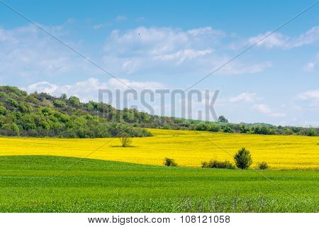Green and yellow colza grass field landscape with fantastic clouds in the background