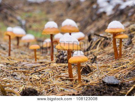 Mushrooms  Wood