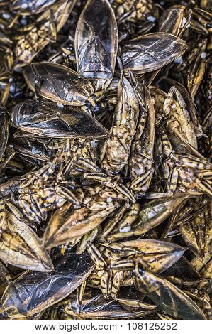Thai Food At Market. Fried Insects