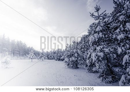 Forest Covered By Snow In Winter Landscape