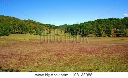 Dalat, Ecology Travel, Grass, Pine Jungle