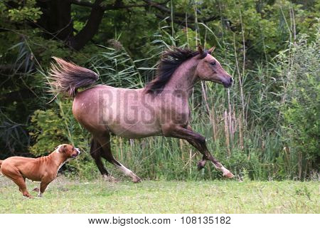 Horse Running On Pasture Rural Scene