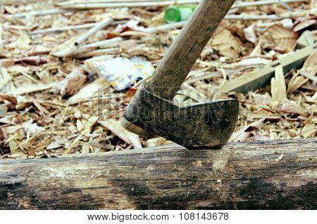 ax struck fallen tree on the ground