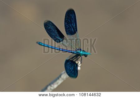 Beautiful Dragonfly Resting On A Branch Near The River
