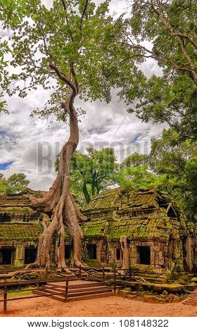 Tree Roots Growing On The Building In Ruin Ta Prohm, Part Of Khmer Temple Complex