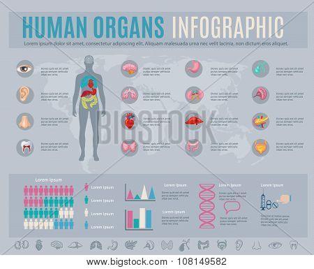 Human Organs Infographic Set
