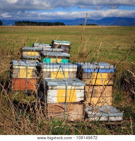 Beehive Farm Box