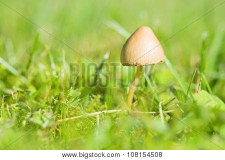 Beautiful toxic mushroom