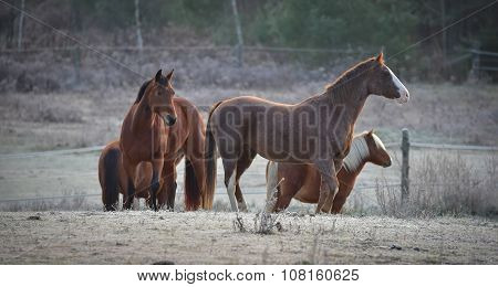 Four Horses - mares and stallions in their corral.