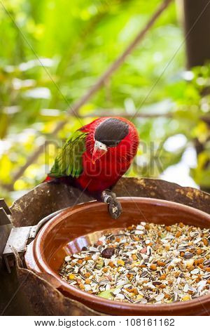 Bright Parrot Is Feeding From Bowl With Seeds In Loro Park (loro Parque), Tenerife