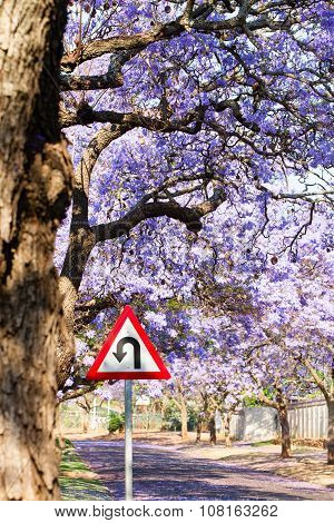 U-turn Warning Road Sign Between Purple Jacaranda Trees