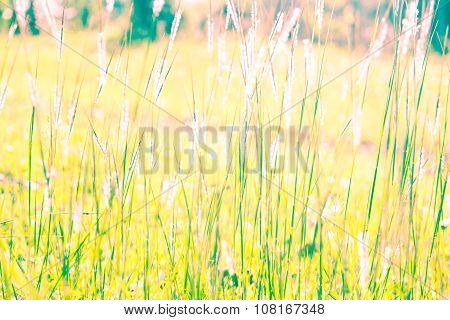 White Reeds Field Vintage Style